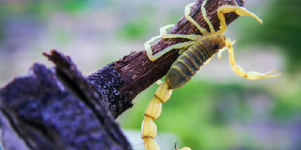 Maneiras simples de proteger sua casa dos Escorpiões.